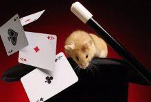 Какие карты нужны для покера